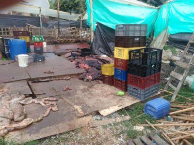 Matadero clandestino fue sellado en Rionegro