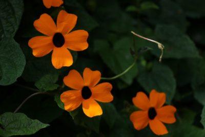 Especie Invasora de Flora en el Oriente Antioqueño